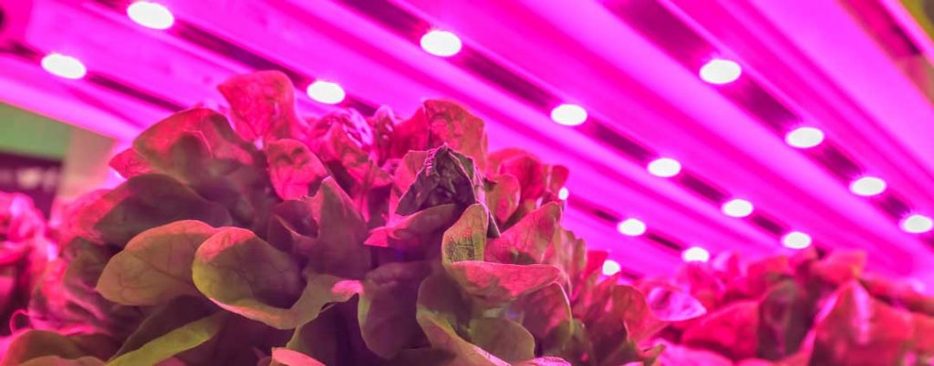 immagine futere crops magazzino automatico verticale
